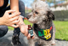 The Best CBD Products for Dogs in 2019
