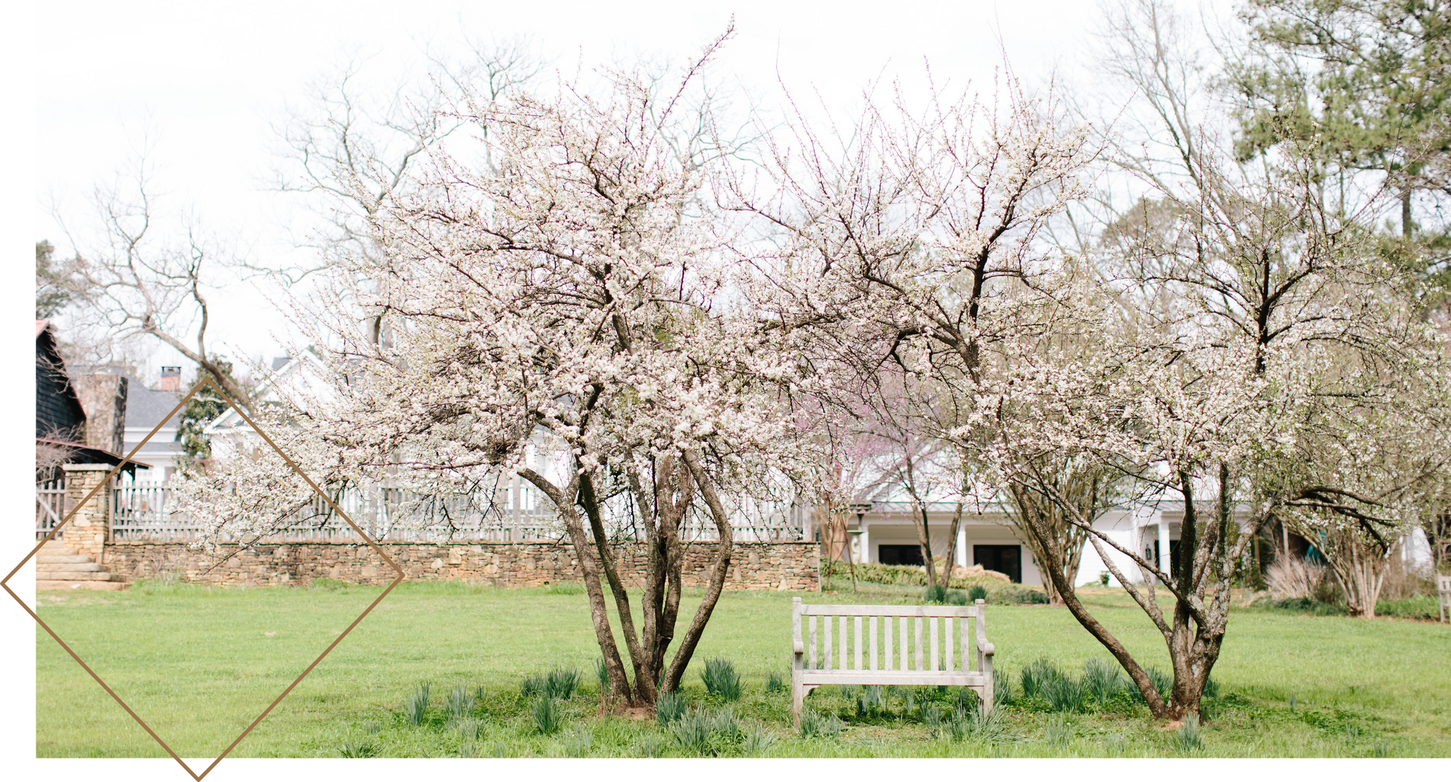 Stunning, spring trees on Serenbe's property