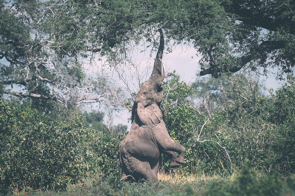 WildArk protects wild elephants through their conservancy work in South Africa