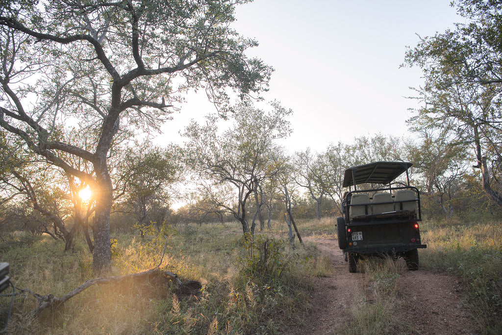 A safari van sits in the middle of Greater Kruger in South Africa