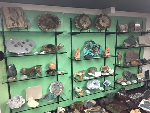 Fossil Realm Showroom - Upper Display Room