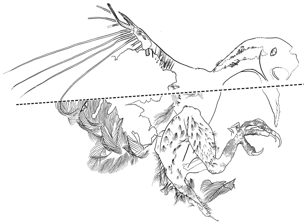 Illustration of feather distribution and preserved skin outline. Credit: Royal Saskatchewan Museum (RSM/ R.C. McKellar)