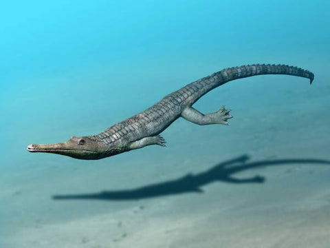 Steneosaurus reconstruction