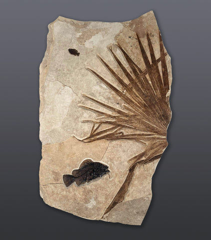 "Large Fossil Palm with Fish - 61"" x 38"""