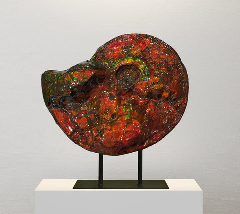 Beautiful Red Iridescent Canadian Ammonite (Ammolite), 13""