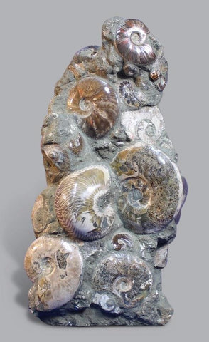 Ammonite Statue - 3 Feet High