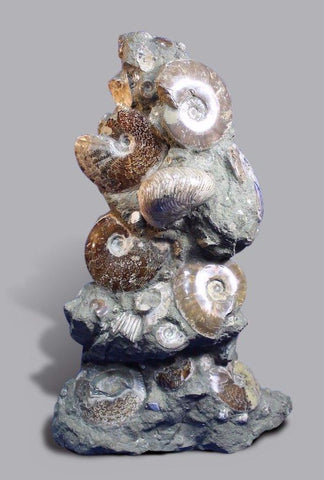 Ammonite Statue - 3 Feet High, 100 lbs.