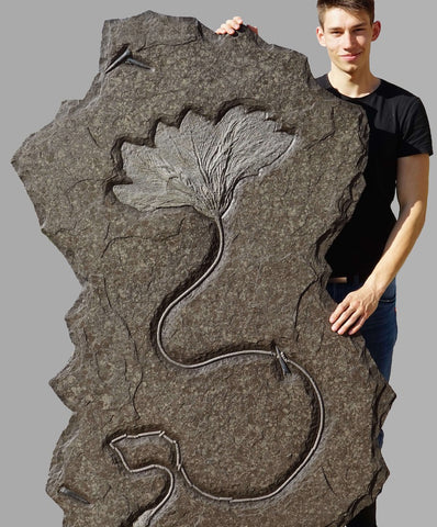 Crinoid Fossils for Sale: Gorgeous Seirocrinus subangularis specimen from Holzmaden, Germany. Measures 5.5 feet high!