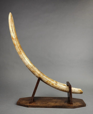 "38"" Mammoth Tusk from Yakutia"