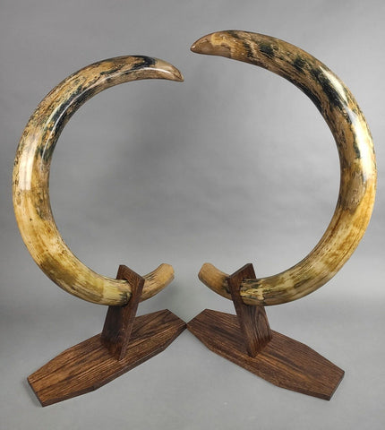 Rare Matched Pair of Mammoth Tusks - 56 inches