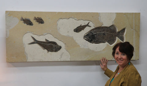 Spectacular Fossil Fish Mural with Large 21.6 inch Phareodus