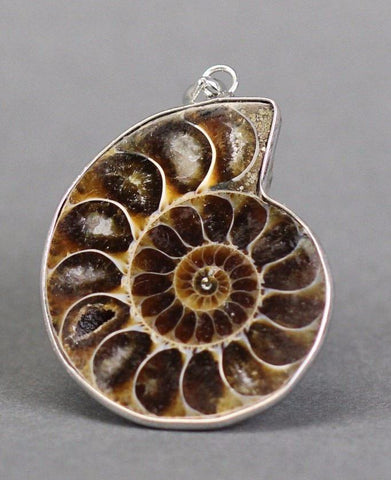 Ammonite Pendant  - 1.2""