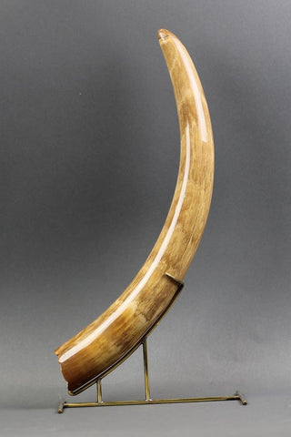 Mammoth Tusk from Siberia - 19.5 inches