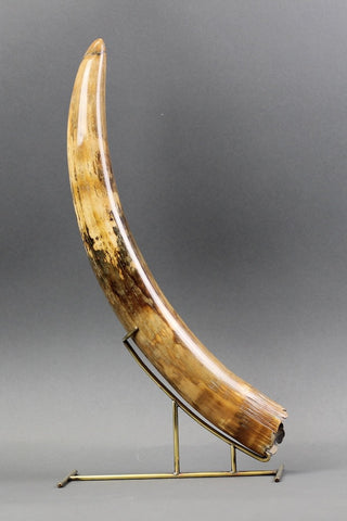 Mammoth Tusk from Siberia - 19.2 inches