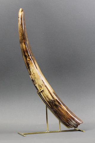Mammoth Tusk from Siberia - 19.1 inches