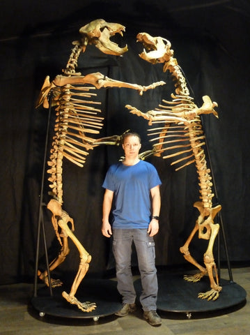 "Battling Cave Bears - Skeletons 9'2"" and 8'8"" Tall"