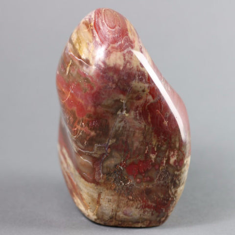 Polished Freeformed Petrified Wood, Madagascar - 6 inches