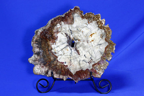 Polished Petrified Wood With Bark, Madagascar - 15.7 inches