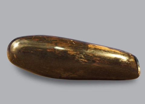 Polished Fossil Sperm Whale Tooth - 5.6 inches