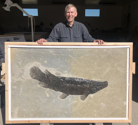 Extremely Rare Fossil Gar - Masillosteus janeae - 43 inches