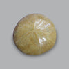 Set of 4 Fossil Sand Dollars (Sea Biscuits), Madagascar