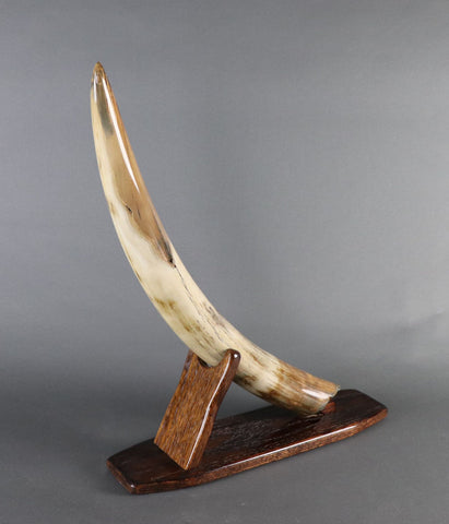 Amazing Mammoth Tusk from Siberia -  27.5 inches