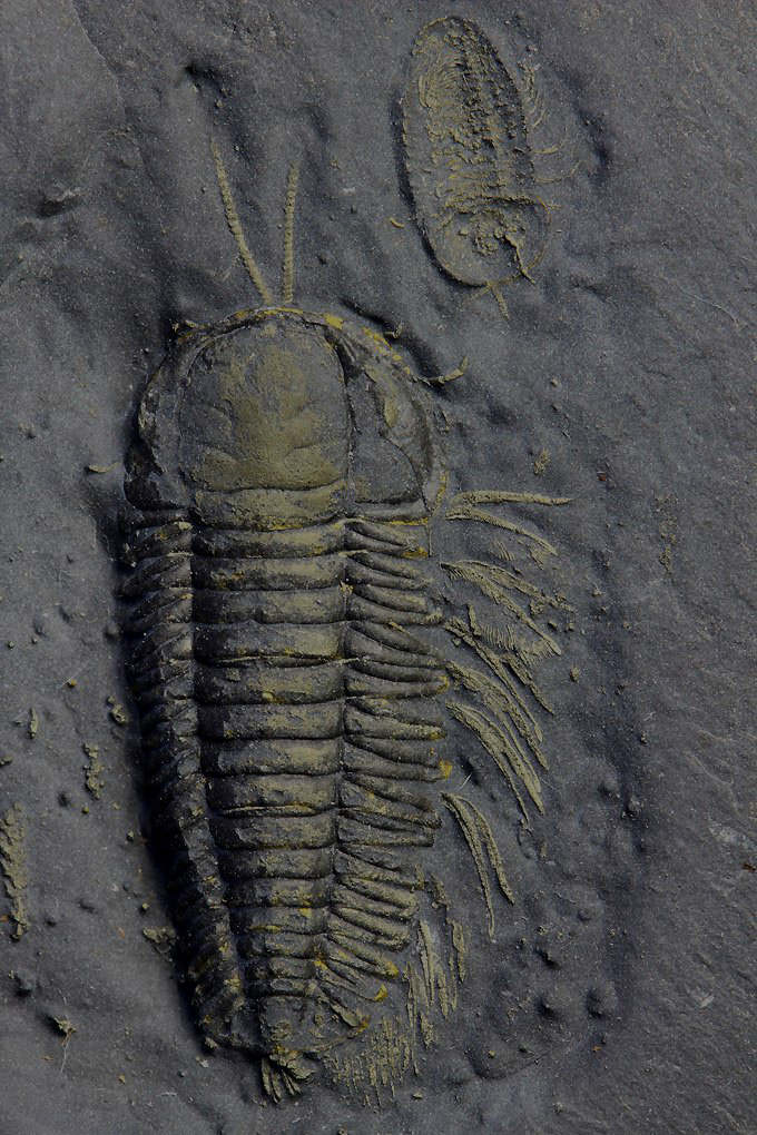 fossil online