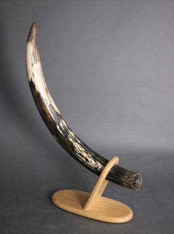 Amazing Black and White Mammoth Tusk - 32""