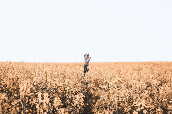 A hand sticks out above a vast field of pink flowers and waves.