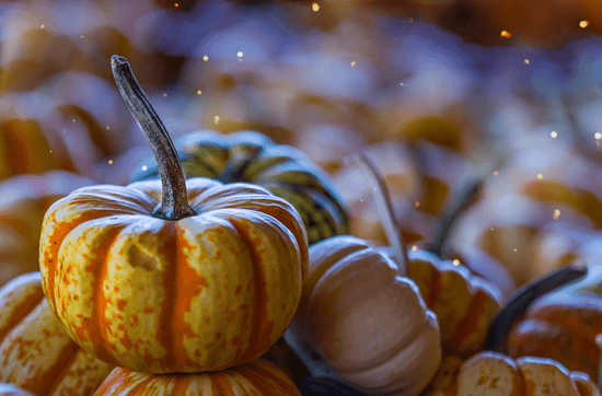A small orange pumpkins sits amongst blurred small pumpkins with glitter falling down on top.