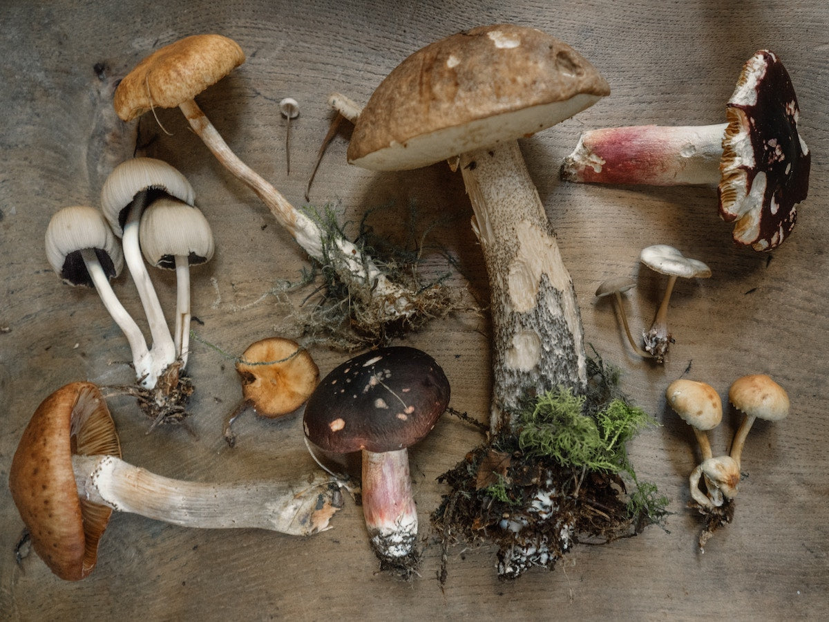 A variety of wild harvested mushrooms against a wooden backdrop.