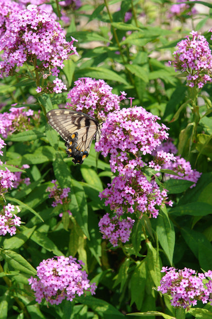 Native Plants & Pollinators