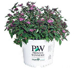 Proven Winners - Spiraea jap. Double Play Artisan (Spirea) Shrub, , #3 - Size Container