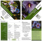 Proven Winners - Hibiscus syriacus Azurri Blue Satin (Rose of Sharon) Shrub, blue w/ red flowers, #3 - Size Container