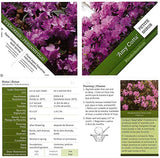 Proven Winners - Rhododendron 'Amy Cotta' (Rhododendron) Evergreen, pinkish-lavender flowers, #3 - Size Container