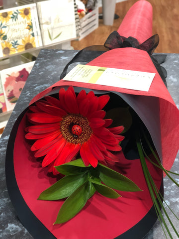 Sweet Single Gerbera