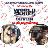 World Series Seven:  The Lucky Puppy Mill Rescues - Chicago English Bulldog Rescue - eBully Boutique