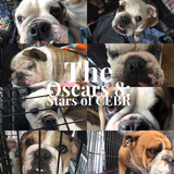 The Oscars Eight:Stars of CEBR