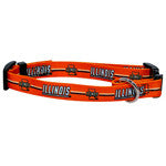 Univ of Illinois Collar - Chicago English Bulldog Rescue - eBully Boutique