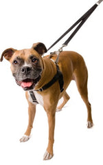 Freedom No-Pull Harness Training Package - Chicago English Bulldog Rescue - eBully Boutique  - 1