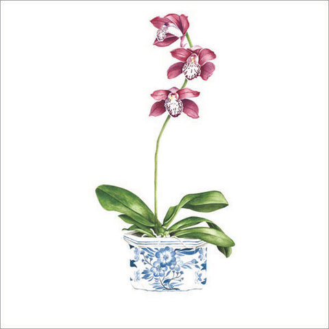 Burgundy orchid in blue and white pot