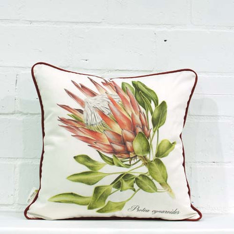 Cynaroides2 Single Cushion Cover