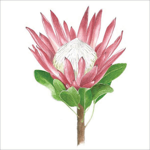 King Protea - Watercolour painting