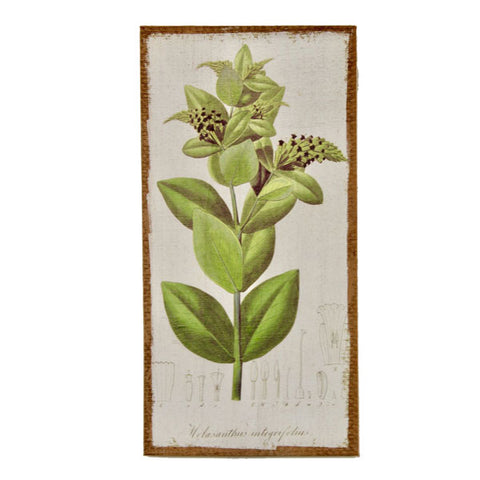 Green Plant Hessian Picture