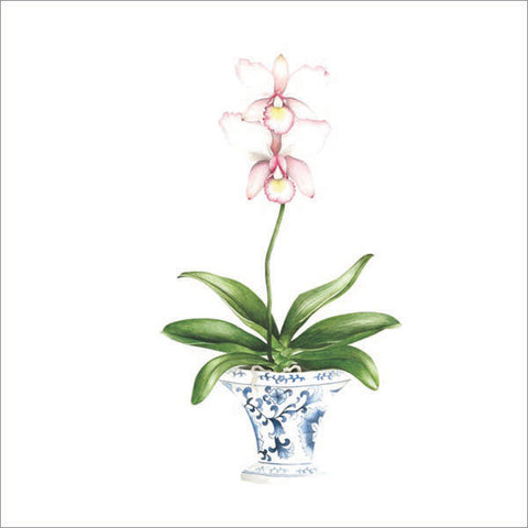 Pale pink orchid in blue and white pot