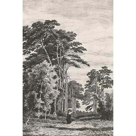 Pine Trees - Sketch | Wallpaper Panel