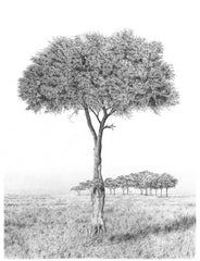 Relish | Pencil Drawings of Africa