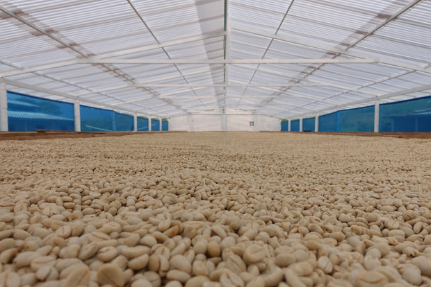 Colombia Samaria raised drying beds