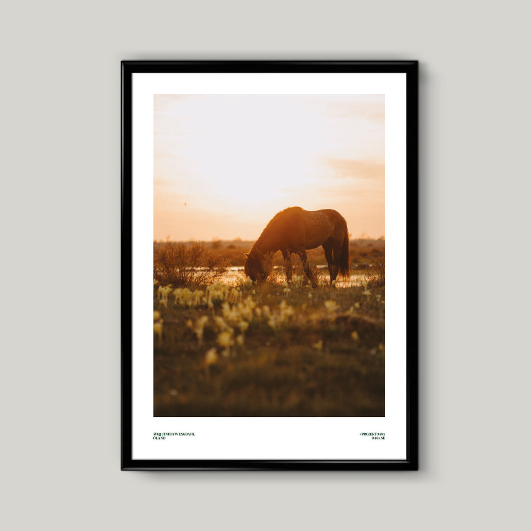 Poster Equine by Wengdahl