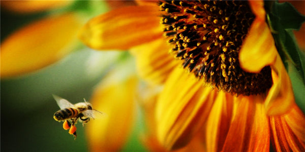 Nothing Bees Collect from Plants and Trees Goes to Waste